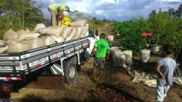 Fazenda de 532 hectares de café e pecuária a 5,500 por hectare