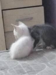 Gatos machos