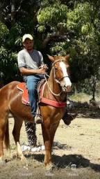 Vendo um cavalo quarto de milha.