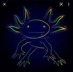Título do anúncio: Axolotl