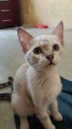 Estou doando 1 cadela de 1 ano e meio porte médio e 2 gatas de 4 meses