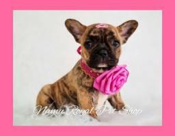 Título do anúncio: Bulldog francês tigrada dourada - fêmea pronta entrega no Namu Royal , fotos verdadeiras