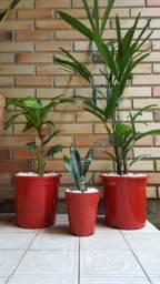 3 Vasos com plantas