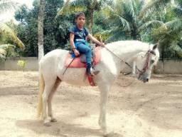 Cavalo Crioulo Nordestino