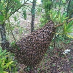 Remoção de abelhas e vespas