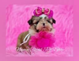 Título do anúncio: Shihtzu fêmea tamanho mini - princesa disponível no Namu Royal, fotos verídicas