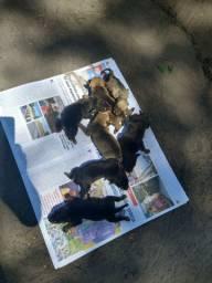 Filhotes de cachorro recém-nascido ESTAMOS DOANDO!