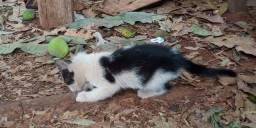 Título do anúncio: Doação de 6 filhotes de gato