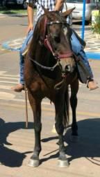 Égua registrada