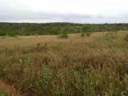Vendo 14.5 hectares de terra em Caraíbas ba na região de ribeirao da toca