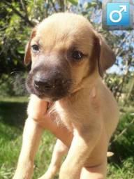 Doação de Cachorrinhos filhotes de 1 mês