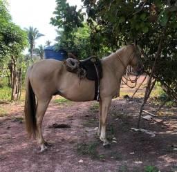 Título do anúncio: V/ cavalo quarto de milha com manga larga machador !