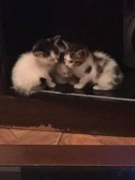 Doação de Gatinhos Fêmeas