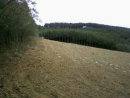 Chácara 12.000m em Mandirituba com plantação de eucalipto