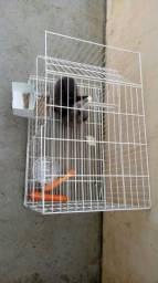 Gaiola com coelhos