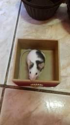 Vende-se de topolino(mini mouse)