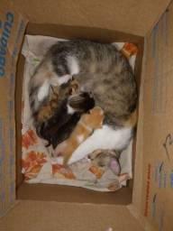 Título do anúncio: Gatos para doar