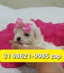 Título do anúncio: Cães Filhotes Maravilhosos em BH Maltês Lhasa Basset Yorkshire Shihtzu Beagle Poodle