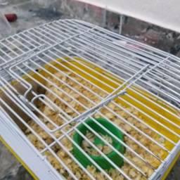 Promoção gaiola e hamster