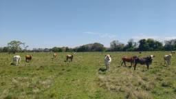 450 hectares de campo para soja e pecuária