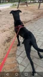 Doando uma cachorra