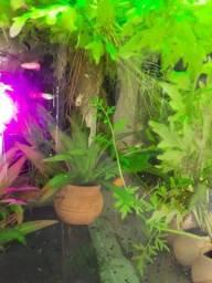 Título do anúncio: Plantas de aquário, não precisa de substrato