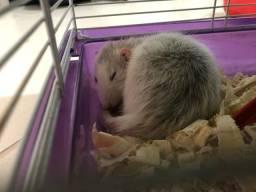 Vendo 2 Hamster (ratinho twister)+ Viveiro com dois andares  + Ração  + Serragem