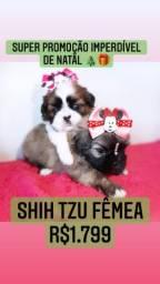 Super promoção! As +LINDAS Shih Tzu Fêmea R$1.799 contrato garantia