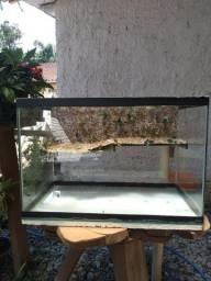 Aquaterrário para Tartaruga