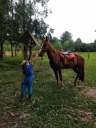 Vendo cavalo mangalarga R$ 4.000