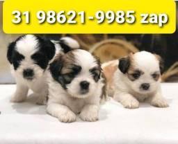 Título do anúncio: Cães Diferenciados Filhotes BH Lhasa Basset Beagle Yorkshire Maltês Shihtzu