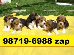 Canil em BH Cães Filhotes Beagle Basset Poodle Lhasa Maltês Shihtzu Yorkshire Bulldog