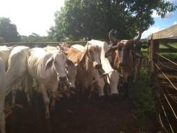 Vacas paridas