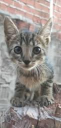 Gatos (Machos e Fêmeas) P/ Adoção