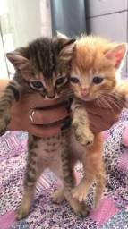 Doação desses lindos gatinhos