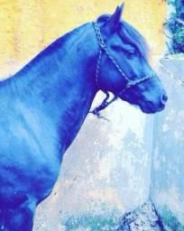 Vendo Lindo Cavalo Crioulo Registrado Piraquara/pr