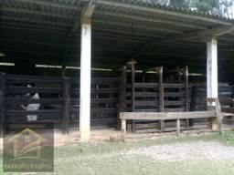 Aluga-se chácara com 18 alqueires com casa e estrutura para criação de gado