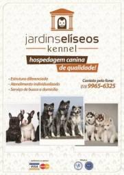 Hospedagem Canina em Pelotas