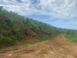 Título do anúncio: Vende-se terreno com BANANAL em Massaranduba