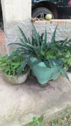 Vende-se plantas