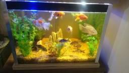 Vendo aquário de 150L