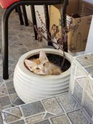Doação de lindo gatinho