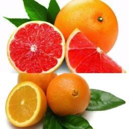Mudas de laranja Bahia e sanguínea
