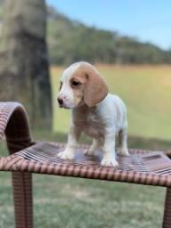 Título do anúncio: Ei pisiu !! Vc ja abracou um dog hoje? NAO