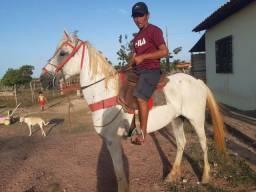 Título do anúncio: Cavalo marchador