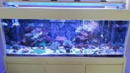 Aquario marinho completo