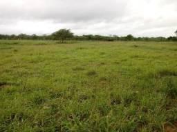 Excelente fazenda de 534 hectares, a 13 km de Quijingue Bahia