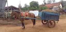Vendo cavalo de carroça  5 anos