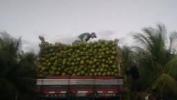 Coco verde direto da Bahia