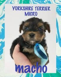 Yorkshire micro macho!!!!!